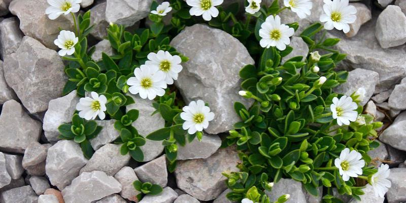 Rock bed weed control